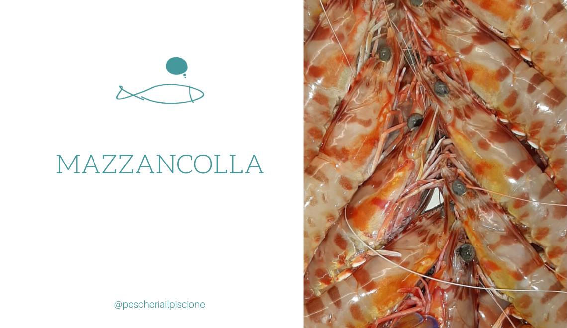Piscione MAZZANCOLLA pesci stagione